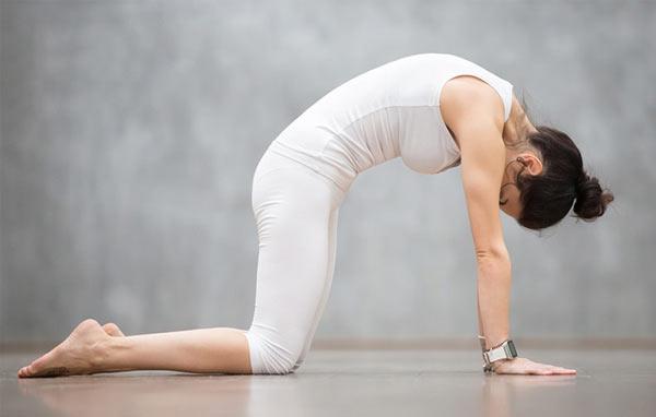 Tư thế Yoga con mèo